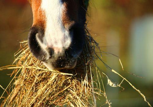 horse-1074867_1280